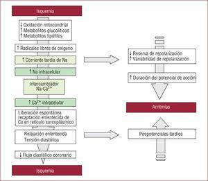 Principales alteraciones electrolíticas celulares («cascada de isquemia») e implicaciones clínicas de la isquemia miocárdica. Modificado de Hale et al12.