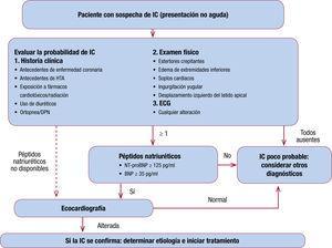 Algoritmo de sospecha diagnóstica de IC según la Sociedad Española de Cardiología en colaboración con atención primaria (2017) (adaptado de SEC-Primaria4). BNP: péptido natriurético cerebral; HTA: hipertensión arterial; IC: insuficiencia cardiaca; NT-proBNP: fracción aminoterminal del propéptido natriurético cerebral.