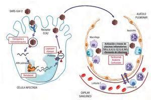 Mecanismos de acción de los principales fármacos empieados contra la COVID-19. ARN: ácido ribonucieico; ECA: enzima de conversión de la angiotensina; IFN: interferon; IL: interleucina; TNF: factor de necrosis tumoral.