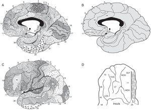 "A. Medial sagittal view of the right hemisphere. Note. The frontal area is on the left and the occipital area on the right; in black, the corpus callosum. B. Medial sagittal view of the right hemisphere in which s some Brodmann areas (BA) cited in the text have been numbered Note. The lines correspond to the boundaries of the areas. In dotted lines are the BA 11, 12, and 25, considered part of the vmPFC. C. Lateral view of the left hemisphere. Note. The frontal area is on the left and occipital area on the right. BA 46 is the dorsolateral prefrontal cortex (dlPFC). D. Basal View of the frontal lobe of the right hemisphere, in which part of the vmPFC is shown in dotted lines. Note. The rest of the base of the frontal lobe is formed by the orbital gyri. OLF, olfactory sulcus; MOS, medial orbital sulcus; TOS, transverse orbital sulcus; LOS, lateral orbital sulcus. A, B and D published with permission from the editor. Original source: Ortega-Escobar J. and Alcazar-Córcoles M. A. Neurobiology of aggression and violence. Yearbook of Legal Psychology 26 (2016) 60-69. Copyright © 2016 College of Psychologists of Madrid. Published by Elsevier Spain, S.L.U. This is an Open Access article under the CC BY-NC-ND license"". C taken and modified from Brodmann (1914)."