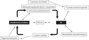Mecanismos reguladores de la relación entre la FA y la insuficiencia cardíaca.