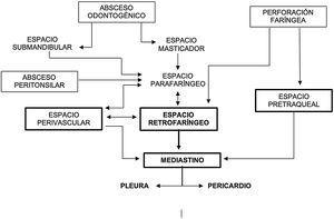 Vías de diseminación de las infecciones orofaríngeas al mediastino (figura modificada de Marty-Ané et al.4).