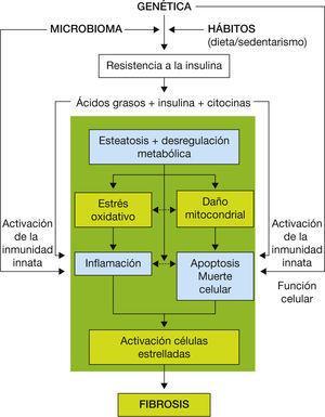 Fisiopatología del hígado graso no alcohólico.