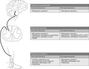 Mecanismos fisiológicos relacionados con el dolor activados por la estimulación nerviosa eléctrica transcutánea (TENS).