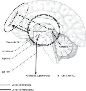 Interacción funcional de las alteraciones neurobiológicas efecto del maltrato infantil. Fuente: creación propia (Alejandro Amores Villalba).
