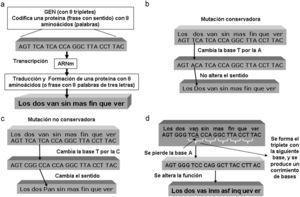 a) Ejemplo de la transcripción del código de un gen. b) Ejemplo de mutación conservadora. c) Ejemplo de mutación no conservadora. d) Ejemplo de mutación «frame shift».