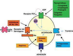 Mecanismo de acción de los diferentes antiagregantes.