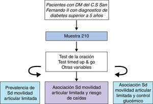 Distintas fases del estudio.