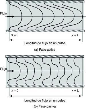 Estructura del flujo pulsante. A) Fase activa: la corriente avanza con velocidad de perfil parabólico, conformando el flujo anterógrado. B) Fase pasiva: hay 2 corrientes, una que se mantiene en el núcleo con un perfil achatado, y otra con velocidad negativa en dirección radial, la cual conforma el flujo retrogrado. Modificada de Fung Y19.