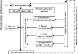 Mecanismos involucrados en el aumento de la excreción urinaria de sodio ante un aumento agudo de la presión de perfusión renal. La presión de perfusión renal tiene un papel central en la regulación de la excreción de sodio urinario mediante la influencia sobre la presión capilar glomerular, sobre el eje-renina-angiotensina-aldosterona, la presión intersticial y el flujo sanguíneo medular, entre otros. NaCl: cloruro de sodio.