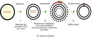 Representación esquemática del método de mutagénesis sitio-dirigida por el sistema Gene TaylorTM.