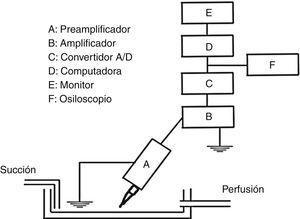 Esquema del dispositivo experimental para obtener el registro de la INa+. Las células TSA201 se depositaron en una caja de Petri que permite la perfusión continua con las soluciones externas previamente burbujeadas con O2 al 100% y manteniendo el volumen constante por medio de una bomba de succión. Las micropipetas se acoplaron a un preamplificador (A) y posteriormente se conectaron a un amplificador (B). Las corrientes iónicas de desplegaron para su constante visualización en la pantalla del ordenador como osciloscopio (E y F) y se digitalizaron mediante un convertidor analógico digital A/D (C), y los registros se almacenaron en un ordenador PC (D).