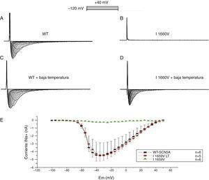Efecto de la temperatura sobre los canales I1660V. Registros de la corriente de sodio para los canales WT (A) y la mutación I1660V (B) en células TSA201 transfectadas. Las corrientes de sodio se obtuvieron a potenciales de prueba entre −100 a 0mV en incrementos de +5mV a partir de un potencial de mantenimiento de −120mV. Se realizó la incubación de las células TSA201 transfectadas a temperatura ambiente durante 48h para rescatar la corriente de sodio I1660V (D) y en la corriente de sodio WT no se observa ningún efecto por la incubación a baja temperatura (LT) (C). E: gráfica de la relación corriente-voltaje para los canales WT, la mutación I1660V y la incubación a temperatura ambiente de la mutación I1660V que muestra un rescate de la corriente de sodio. Modificada con permiso de Cordeiro et al.3.