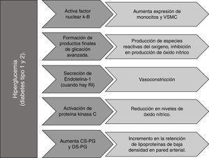 Efecto de la hiperglucemia sobre la formación y/o progresión de la placa aterosclerótica. CS-PG: condroitín sulfato&#59; DS-PG: dermatán sulfato&#59; VSMC: células del músculo liso. Fuente: autoría propia.