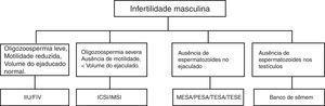 Causas e possíveis tratamentos para a infertilidade masculina. IIU, inseminação intrauterina&#59; FIV, fertilização in vitro&#59; ICSI, injeção intracitoplasmática de espermatozoide&#59; MESA, aspiração microcirúrgica de espermatozoides de epidídimo&#59; PESA, aspiração percutânea de espermatozoides de epidídimo&#59; TESA, aspiração percutânea de espermatozoides do testículo&#59; TESE, extração por biópsia de espermatozoides do testículo.