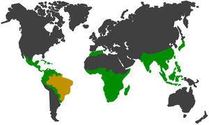 In green and yellow, the geographic distribution of non-human primates52,54,56,57. In yellow, Brazil which has large range of species and subspecies of neotropical non-human primates in the wild fauna, representing approximately 21% of the group in the world.56,57