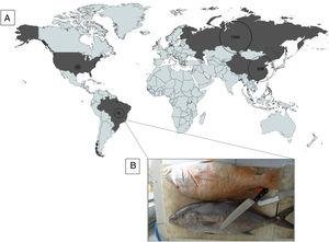 (A) Global incidence of Haff Disease (1942–2019). (B) Fish bought by the patients. They had eaten the gray one below ('Olho-de-boi' – Seriola spp) before developing the symptoms of Haff disease.