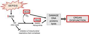 Generation and significance of reactive nitrogen species (RNS).