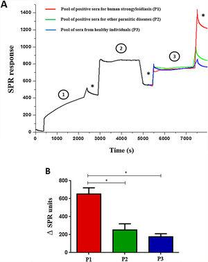 Surface Plasmon Resonance using scFv to detect immune complexes in pooled human sera (A) and variation between the end result and early immobilization of each pool of sera (B). The gold electrode was added of scFv molecules (1) blocked with 1% casein (2) and sera pool samples were added (3). (*) Washing steps in phosphate buffer. Data are expressed as mean±standard deviation (n=2) and are representative of two independent experiments with similar results. *P<0.05.