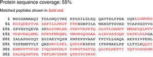 Partial amino acid sequence of the isolated lipase showing homology with Acinetobacter calcoaceticus (55% identity).