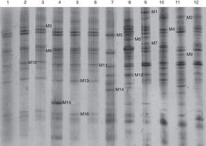 Denaturing gradient gel electrophoresis (DGGE) banding patterns of root and soil samples from three soybean cultivars after two and three years continuous cropping. Lanes 1–6: root samples&#59; lanes 7–12: soil samples. 1: HN37, two years cropping&#59; 2: HN37, three years cropping&#59; 3: HN44, two years cropping&#59; 4: HN44, three years cropping&#59; 5: HN48, two years cropping&#59; 6: HN48, three years cropping&#59; 7: HN37, two years cropping&#59; 8: HN37, three years cropping&#59; 9: HN44, two years cropping&#59; 10: HN44, three years cropping&#59; 11: HN48, two years cropping&#59; 12: HN48, three years cropping.