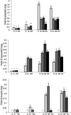 Optimization of co-culture conditions of RGT seedlings and Aspergillus sp. Different letters indicated significant differences among the treatments at p=0.05 level. C: control&#59; 1: co-culture when RGT seedlings had taken root for 10d&#59; 2: co-culture when RGT seedlings had taken root for 15d&#59; 3: co-culture when RGT seedlings had taken root for 20d&#59; 4: co-culture when RGT seedlings had taken root for 25d&#59; L: final concentrations of Aspergillus sp. spores in media was 1×103mL–1&#59;M: final concentrations of Aspergillus sp. spores in media was 1×104mL–1&#59; H: final concentrations of Aspergillus sp. spores in media was 1×105mL−1.