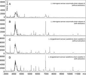 """MALDI-TOF MS spectra obtained by analyzing the reference strains of Leptospira interrogans and Leptospira borgpetersenii with and without extraction as described in """"Material and methods"""" section. These data show the importance of the protein extraction to obtain the better quality of spectra."""
