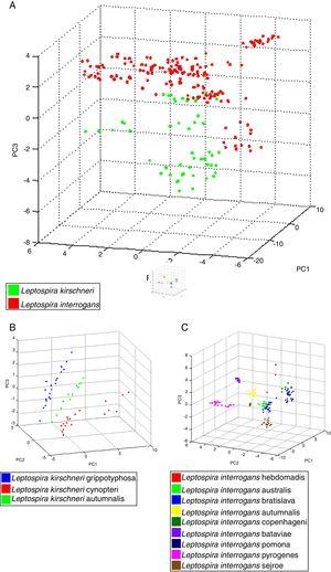 Principal component analysis (PCA) using tools ClinProTool™. In (A), PCA of strains analyzed, for data standardization by species, data from different serovars were used. In (B), we have PCA of different serovars of the L. kirchneri and in (C), we have PCA of different serovars of L. interrogans.