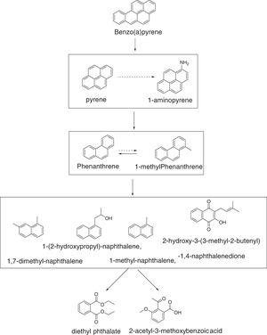 Proposed pathways for anaerobic degradation of BaP by Cellulosimicrobium cellulans CWS2.