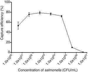 The capture efficiency of the 0.1mg IMBs to S. typhi cultures in different concentrations (CFU/mL).