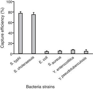 The specificity of IMBs with selected bacterial strains. The capture efficiency of different bacteria with 0.1mg of IMBs.