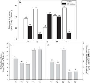 Activity of glutamine synthetase (*CV=14.48%) (A), activity of glutamate synthase (B) (*CV=13.59%) and glutamate dehydrogenase aminating (C) (*CV=19.59%) on nodules of cowpea plants inoculated Bradyrhizobium sp. (T1) or co-inoculated Bradyrhizobium sp. and Actinomadura sp. (T2), Bradyrhizobium sp. and Paenibacillus graminis (T3), Bradyrhizobium sp. and Bacillus sp. (T4) and Bradyrhizobium sp. and Streptomyces sp. (T5), without and with salt stress induction (0 and 50mmolL−1 NaCl), and independent of the cultivation condition, respectively. Means followed the same letter lower (bacterial combinations) and capital (cultivation conditions) not differ statistically (p<0.05) according to Tukey's test. *Variation's coefficient.
