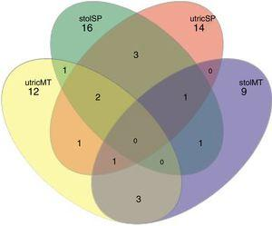 Venn diagram represented by shared UTO's of stolons (stol) and utricules (utric) of U. breviscapa from Mato Grosso (MT) and São Paulo (SP) (dissimilarity of 0.09). Therefore: utricMT: utricules from Mato Grosso, stolSP: stolons from São Paulo, utricSP: utricules from São Paulo and stolMT: stolons from Mato Grosso.