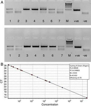 (A) Agarose gel depicting PCR of HBV samples. Panel A shows PCR without RecA, while panel B shows PCR with RecA for the same samples. Lanes 1, 2, 3, 4, 5, 6 and 7 show PCR amplicons from ELISA positive HBV samples. +ve denotes positive control PCR with pTZ57R/T-HBV plasmid and −ve denotes PCR with no template control. (B) Representative standard curve of the SYBR Green-1 qPCR assay for HBV. The plots were generated using a 10-fold dilution series ranging from 250 to 2.5×105copies/mL of plasmid DNA standard (pTZ57R/T). Duplicate reactions for each standard dilution were used. The standard curve was generated by plotting the log10 copy number of starting plasmid quantity on the x-axis against the corresponding threshold cycle (Ct) value on the y-axis.