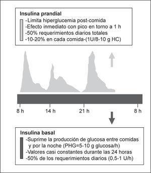 Secreción fisiológica de insulina. PHG: producción hepática de glucosa.
