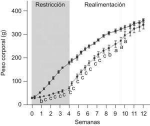Evolución del peso corporal de ratas C (–<br/>▪–) y ED (– –??– –) durante el periodo de restricción nutricional-realimentación. C: grupo control, ED: grupo experimental. Los valores representan la media±ES (n=10 animales/grupo). Las letras expresan diferencias significativas entre grupos: ap<0,05; bp<0,01; cp<0,001.
