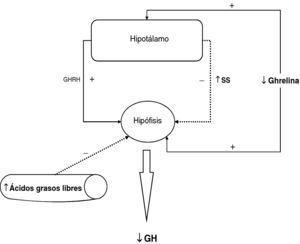 Mecanismos fisiopatológicos del hiposomatotropismo de la obesidad.