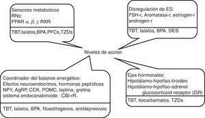 Candidatos a obesógenos en humanos y niveles donde actúan. BPA: bisfenol A&#59; DES: dietilestilbestrol&#59; ES: esteroides sexuales&#59; PFCs: perfluoro-alquil compuestos&#59; RNs: receptores nucleares&#59; TBT: tributin estaño&#59; TZDs:glitazonas.