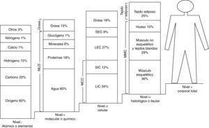 Modelo multicompartimental o de los 5 niveles de composición corporal. LEC: líquidos extracelulares; LIC: líquidos intracelulares; MCC: LIC+SIC: masa celular corporal; MLG: masa libre de grasa; MMC: masa magra corporal; SEC: sólidos extracelulares; SIC: sólidos intracelulares. Adaptada de Tojo et al.49