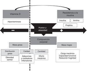 Efecto bidireccional de la obesidad sobre el metabolismo o??seo.