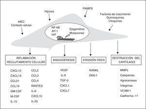 Vías de participación de los fibroblastos sinoviales en la AR. Estímulos y cambios intracelulares más importantes modificadores del fenotipo de los FS y sus mecanismos efectores en la artritis crónica. AP-1: proteína activadora&#59; DKK-1: Dickkopf-1&#59; GM-CSF y M-CSF: factores de estimulación de colonias de granulocitos y macrófagos&#59; HIF: factor inducible por hipoxia&#59; MEC: matriz extracelular&#59; MMPS: metaloproteinasas&#59; NFκB: factor nuclear potenciador de las cadenas ligeras kappa de las células B activadas&#59; PAMPS: patrones moleculares asociados a patógenos&#59; RANKL: receptor activador de NFκB&#59; TGF-β: factor de crecimiento transformante-β&#59; VCAM-1: molécula de adhesión celular vascular-1&#59; VEGF: factor de crecimiento endotelial vascular.