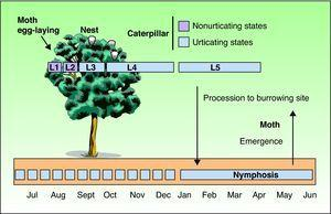 Annual biological cycle of the pine processionary moth (Thaumetopoea pityocampa).