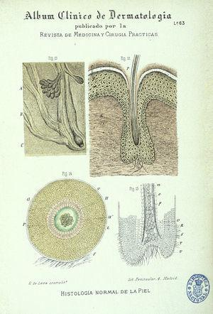Histologic illustration of skin adnexa from the 1886 dermatology manual (Álbum Clínico de Dermatología) by Jerónimo Pérez Ortiz, published by the journal Revista de Medicina y Cirugía Prácticas. The illustrations were probably versions of those that appeared in other European anatomy textbooks of the period.
