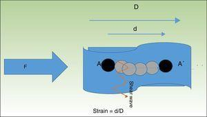 When tissue is compressed with a force F, the tissue particles (A) undergo a displacement (A′). The quotient of the displacement (d) of the structure being examined and its total initial length (D) is known as strain. The particles are displaced in perpendicular to this pressure wave, generating waves called shear waves.