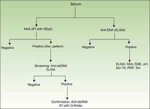 Algorithm for determination of antibodies. ELISA indicates enzyme-linked immunosorbent assay; IFI, indirect immunofluorescence.