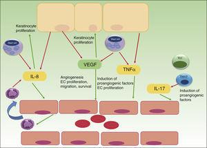 The role of angiogenesis in the pathogenesis of psoriasis. Keratinocytes, immune cells and endothelial cells activate and maintain the inflammatory skin condition of psoriasis by secretion of different pro-angiogenic factors and cytokines. VEGF, vascular endothelial growth factor; IL, interleukin; TNF, tumor necrosis factor; EC, endothelial cell; red arrows indicate secretion; green arrows indicate activation or attraction.