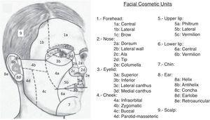 Main facial cosmetic units and subunits.