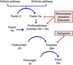 Mechanisms of action of direct oral anticoagulants in the coagulation cascade. Rivaroxaban, apixaban, and edoxaban act by inhibiting factor Xa; dabigatran is a direct thrombin inhibitor.