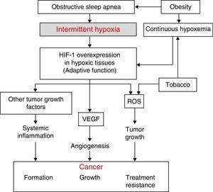 Physiopathological hypothesis on the relationship between SAHS and cancer and the role of the most relevant confounding factors. HIF-1, hypoxia-induced factor; ROS, reactive oxygen species; VEFG, vascular endothelial growth factor.