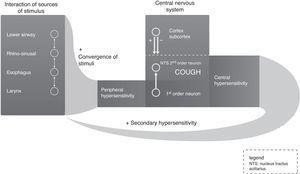 Neurological feedback circuit of chronic cough.
